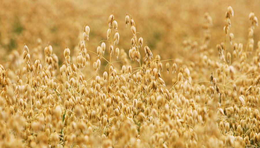 中共將種源安全升至國安戰略高度 或面臨糧食危機