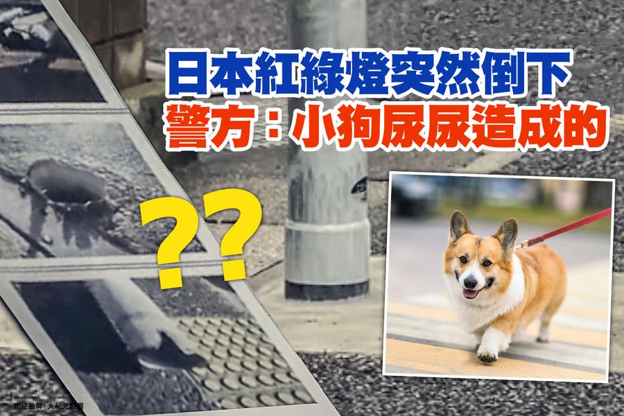 日本紅綠燈突然倒下 警方:小狗尿尿造成的