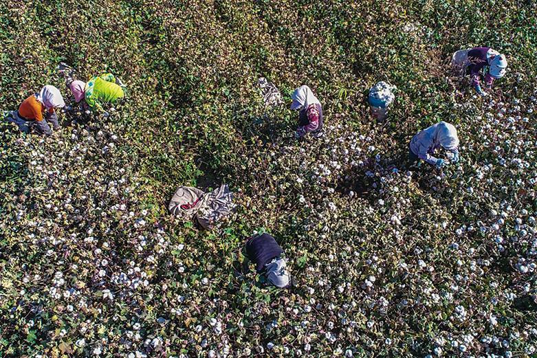 美國政府已經對新疆番茄、棉花和一些太陽能產品發出禁令。圖為新疆哈密的農民在採摘棉花。(Photo credit should read STR/AFP via Getty Images)