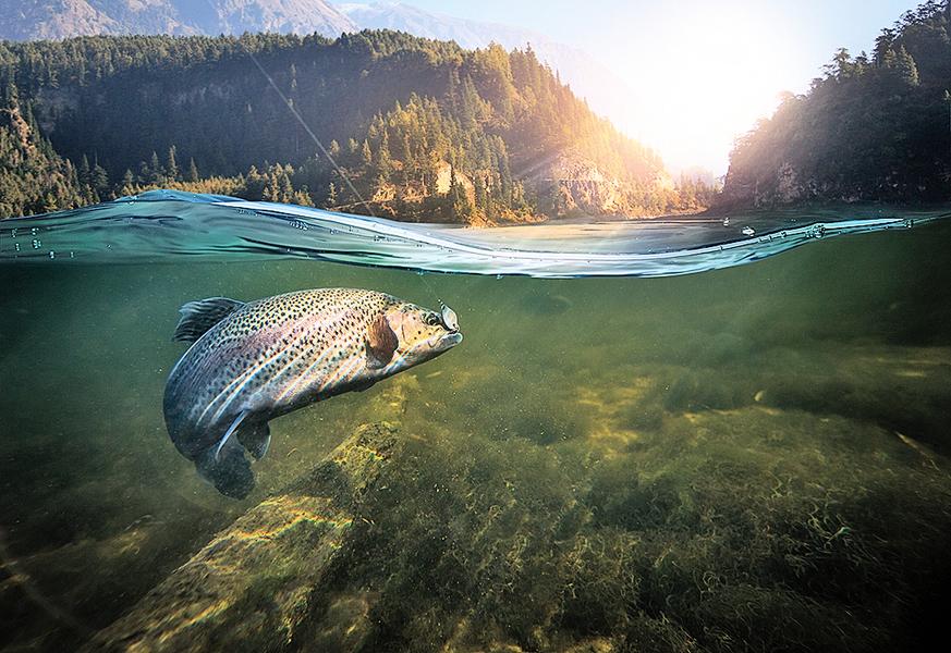 冰毒污染河流 魚類被動吸毒也上癮