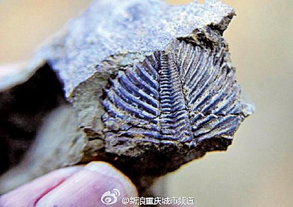 重慶酉陽發現疑似上億年三葉蟲化石