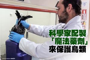 科學家用假巢穴氣味引捕食動物離開真鳥巢