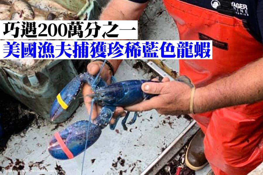 巧遇200萬分之一 美國漁夫捕獲珍稀藍色龍蝦