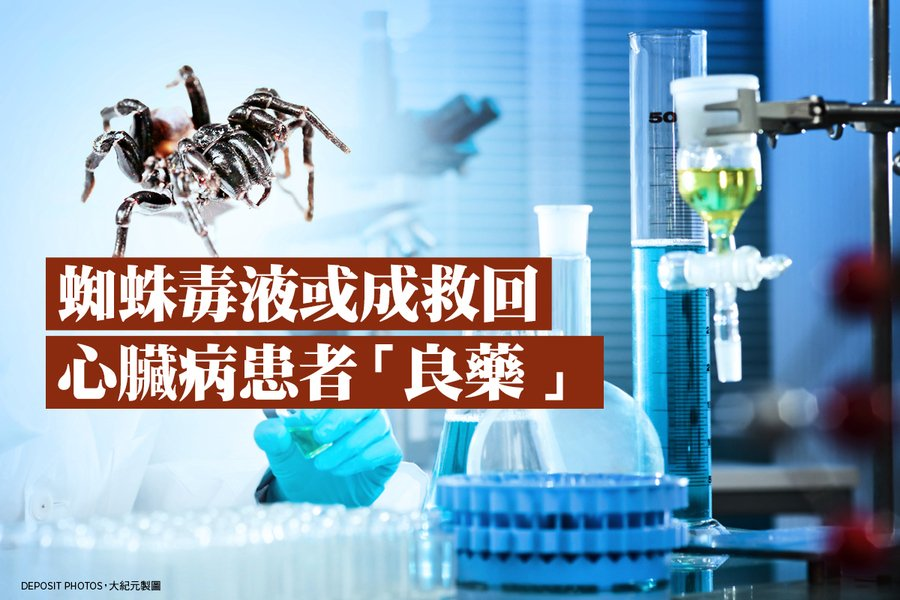 蜘蛛毒液或成救回心臟病患者「良藥」