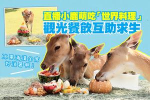 觀光餐飲互助求生 直播小鹿萌吃「世界料理」