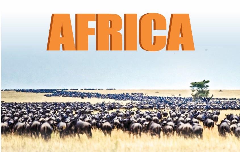 【走進非洲 ⑤】獅子蜜月與角馬遷移
