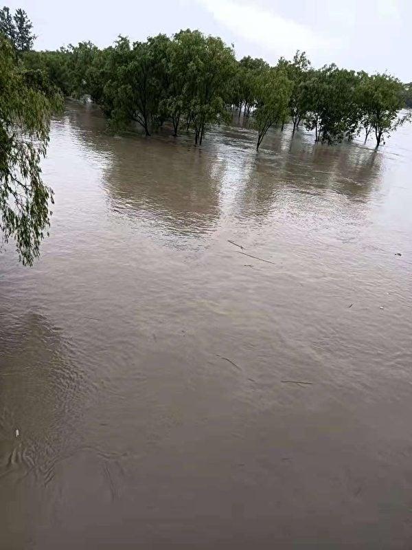從上虞人民大橋往下拍到的公園被淹,只看到樹頂。(受訪者提供)