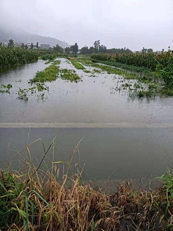 紹興上虞農田被淹。(受訪者提供)