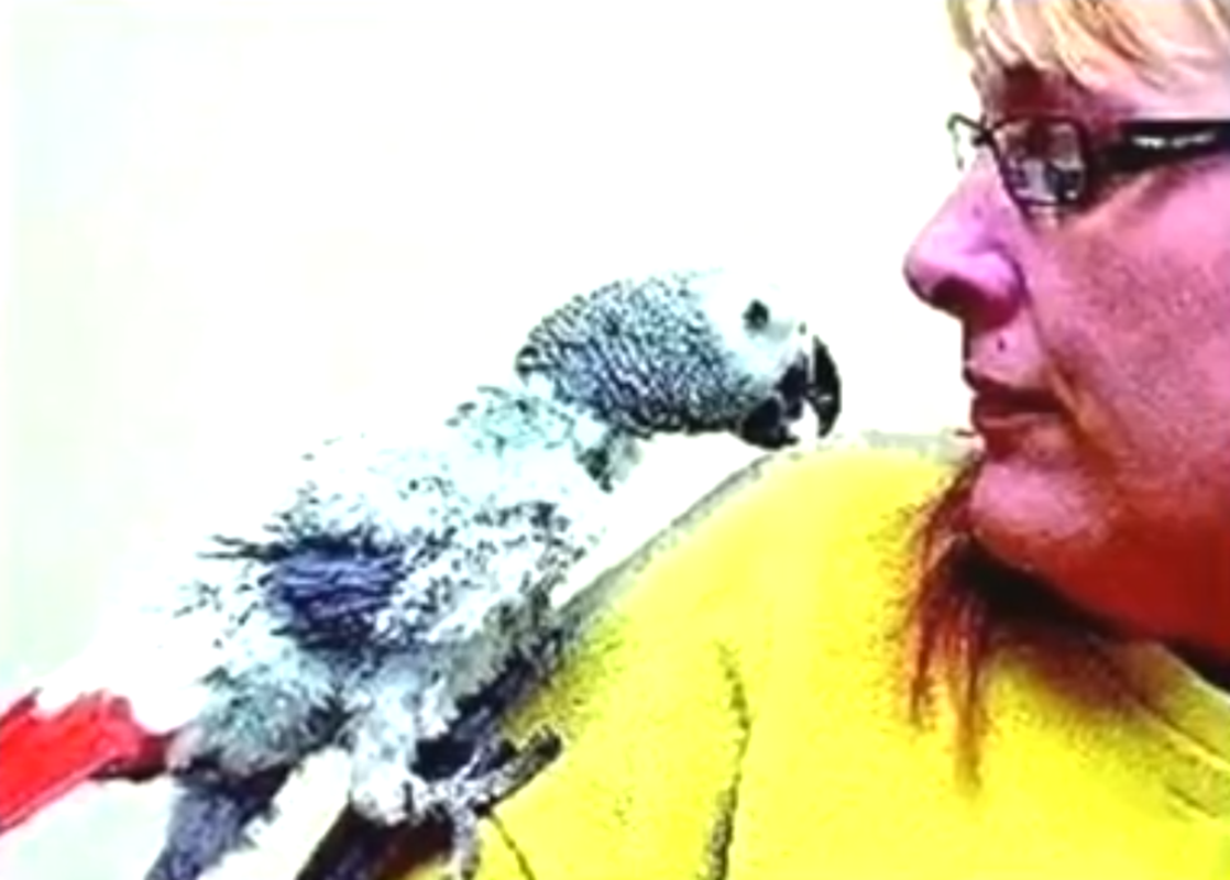 法蘭茜絲與她郵購的一隻鸚鵡。(未解之謎影片截圖)