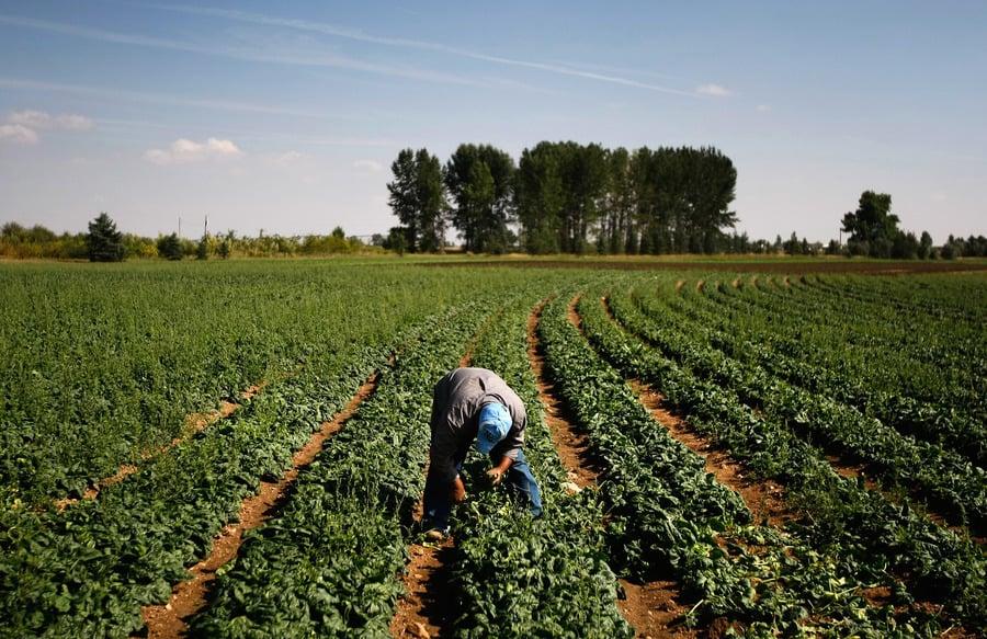 確保糧食不受中共控制 美擬立法禁中企購買農地