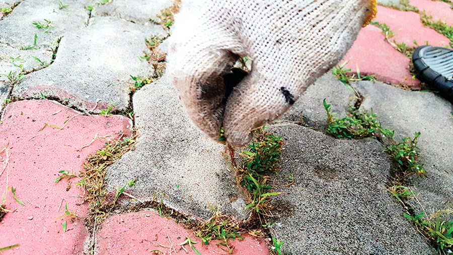 自製天然除草劑園藝維護好幫手