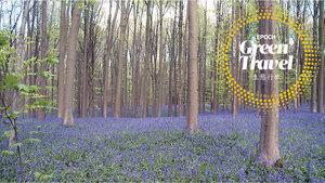比利時別具一格的藍色森林
