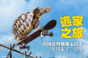 英國寵物龜離家出走 一年只走了一公里
