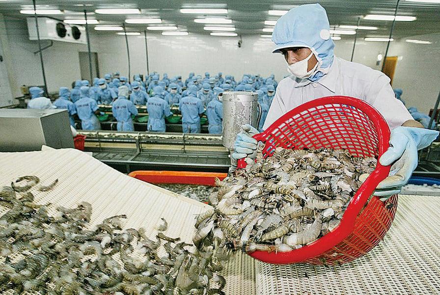 中共以感染為由拒收印度蝦