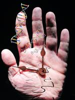新工具iAge揭示人體實際老化程度