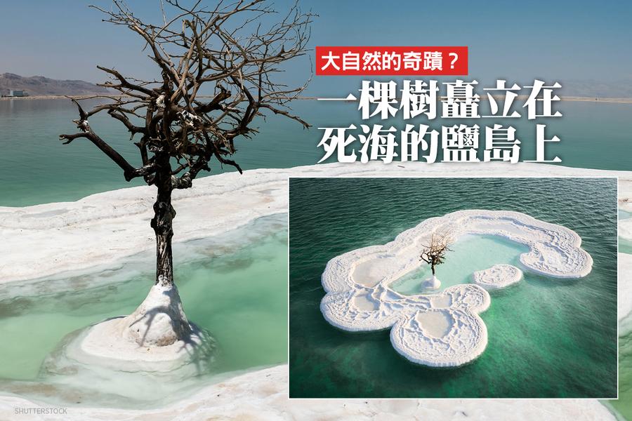 大自然的奇蹟? 一棵樹矗立在死海的鹽島上