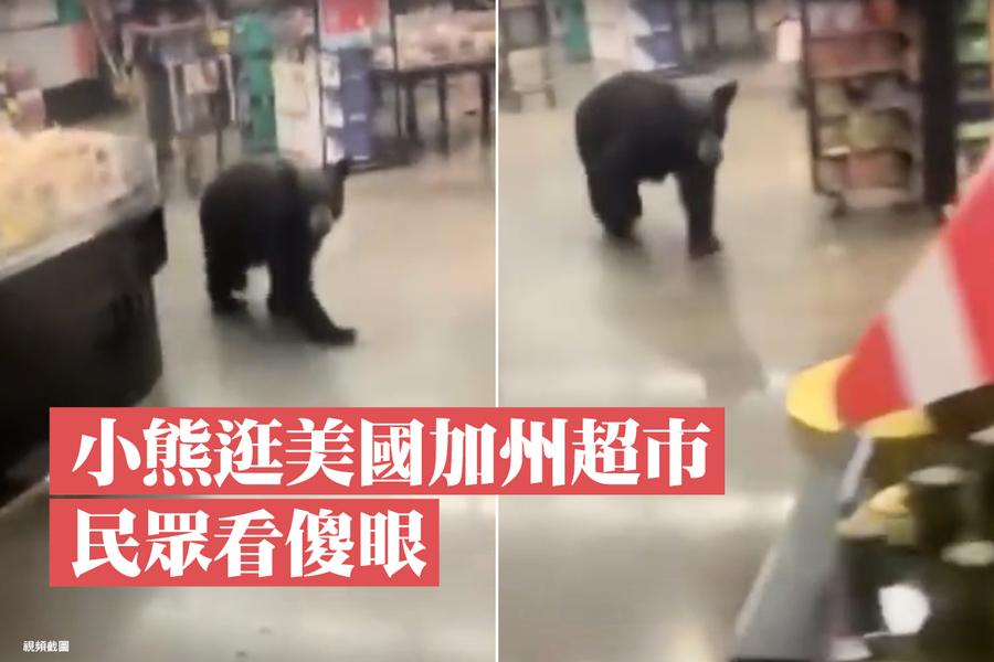 小熊逛美國加州超市 民眾看傻眼