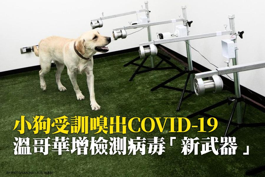 小狗受訓嗅出COVID-19  溫哥華增檢測病毒「新武器」