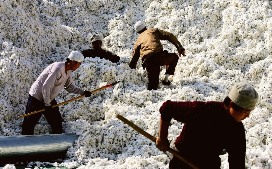 美國智庫:新疆棉花番茄等仍由中間商售往全球