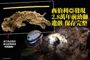 西伯利亞發現2.8萬年前幼獅遺骸 保存完整