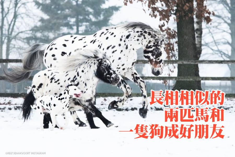 長相相似的兩匹馬和一隻狗 成好朋友