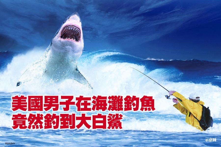美國男子在海灘釣魚 竟然釣到大白鯊