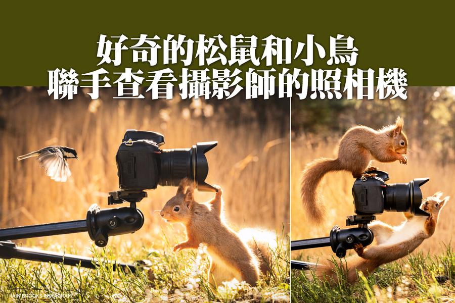好奇的松鼠和小鳥聯手查看攝影師的照相機
