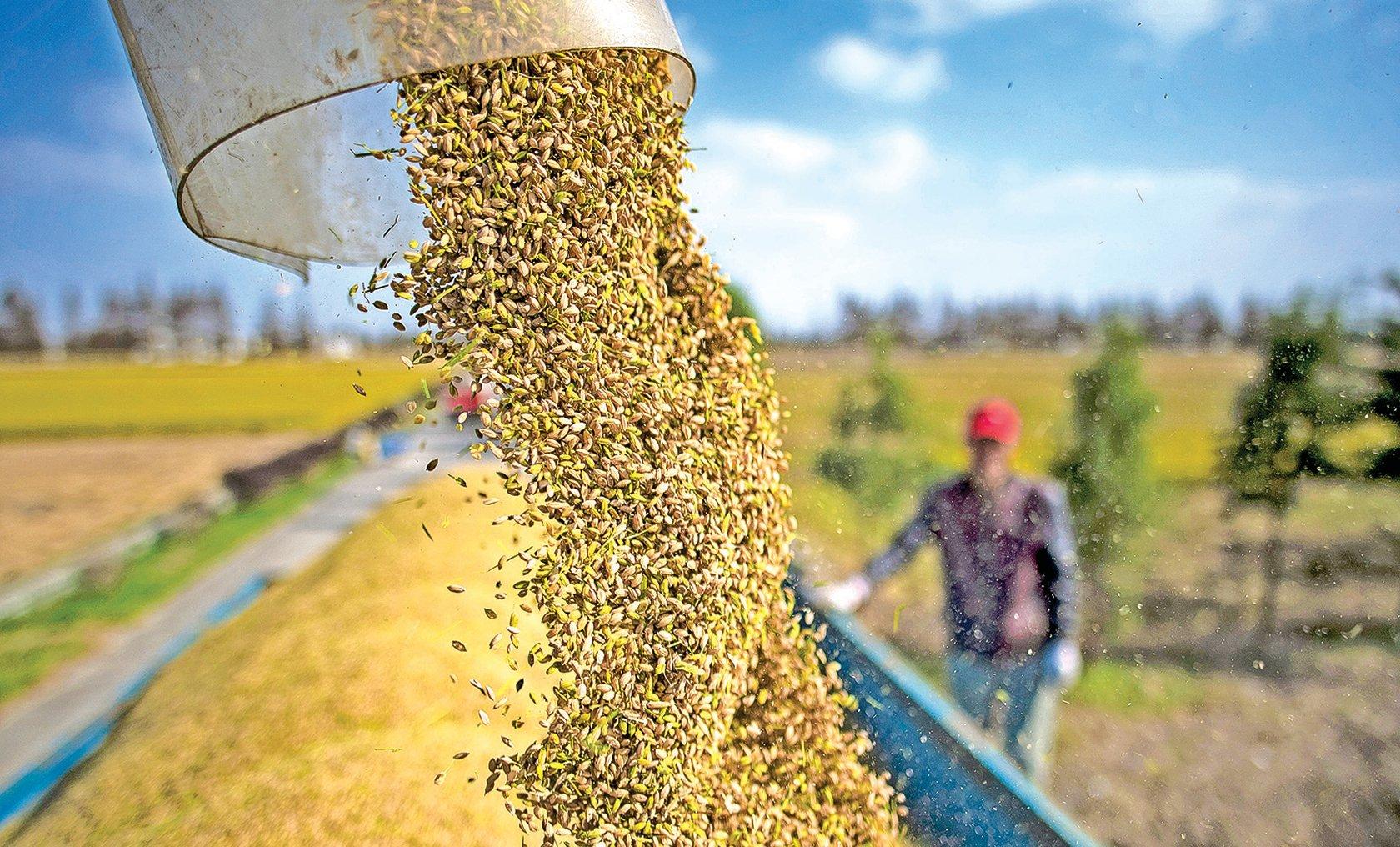 2020年1到12月中國糧食累計進口14,262.1萬噸,比此前大幅增長,引發關注。(AFP)