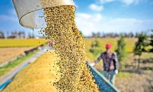 中共糧食進口激增 分析指是備戰行動