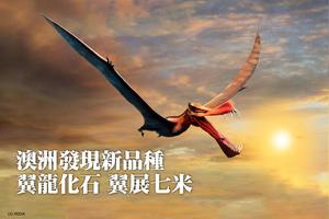 澳洲發現新品種翼龍化石 翼展七米