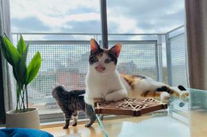 【遠走他鄉】寵物也移民  港人花逾8萬攜三愛貓赴英
