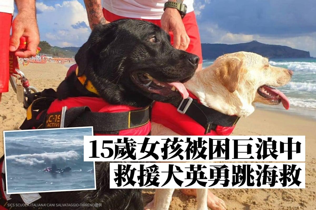 前不久,兩隻訓練有素的救援犬在意大利一處海灘成功拯救溺水女孩,被民眾稱讚為「英雄」。(SICS Scuola Italiana Cani Salvataggio-Tirreno提供)