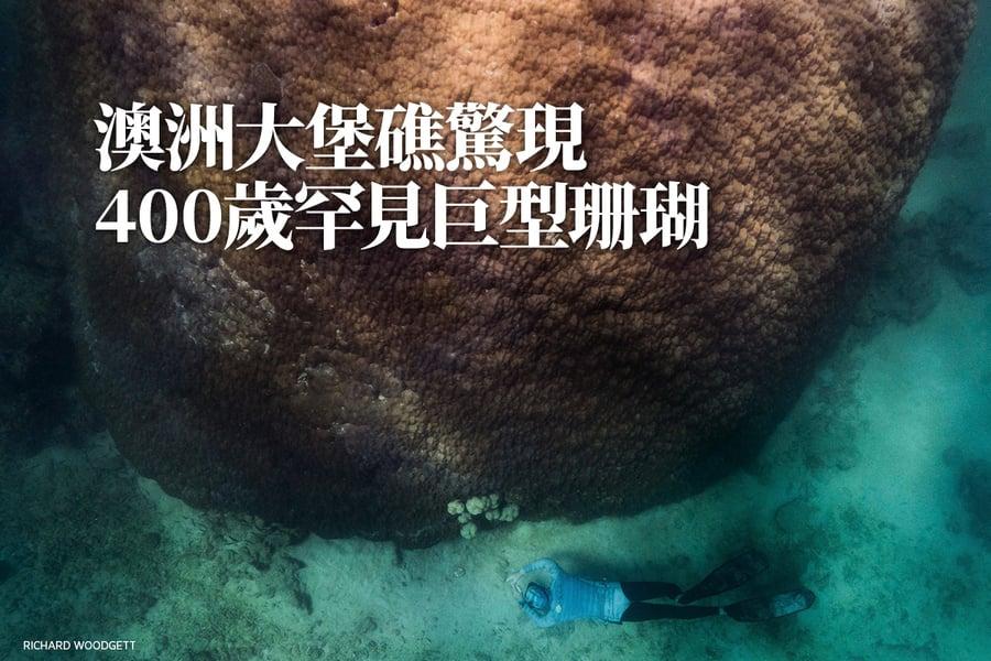 澳洲大堡礁驚現400歲罕見巨型珊瑚