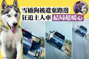 雪橇狗被遺棄路邊 狂追主人車 結局超暖心