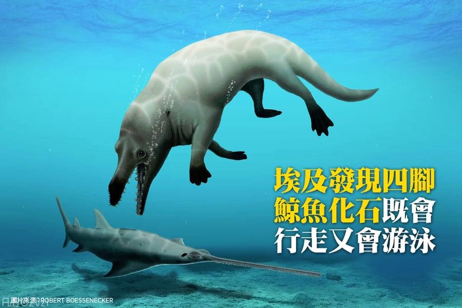 埃及發現四腳鯨魚化石 既會行走又會游泳