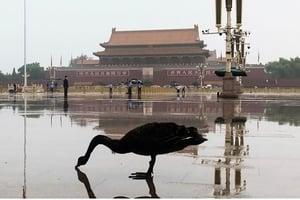 不祥之兆? 黑天鵝突降北京天安門廣場