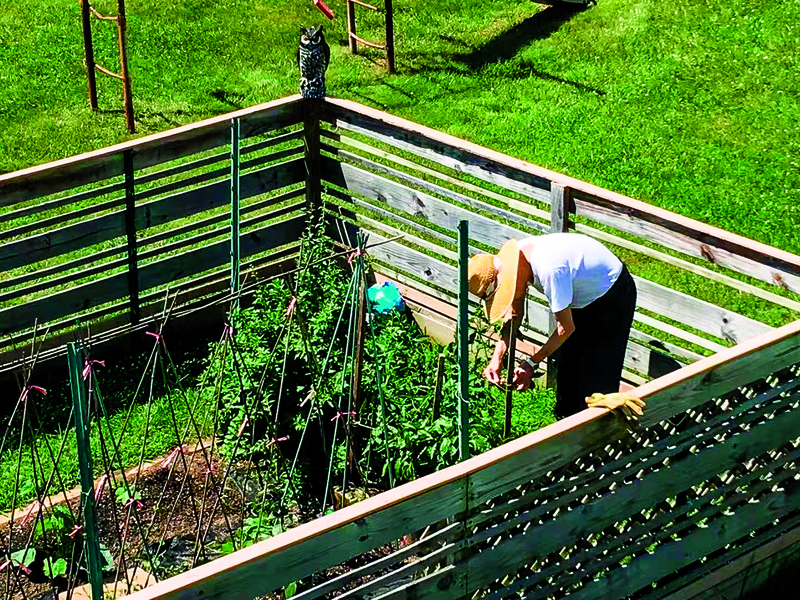 爸爸的菜園