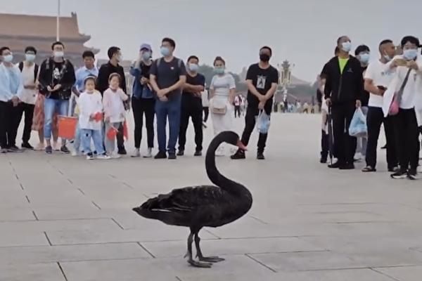 中國異象頻頻 中共老巢窯洞崩塌 天安門飛來黑天鵝