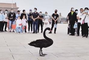 北交所成立黑天鵝來了