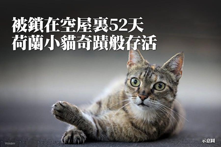 被鎖在空屋裏52天 荷蘭小貓奇蹟般存活