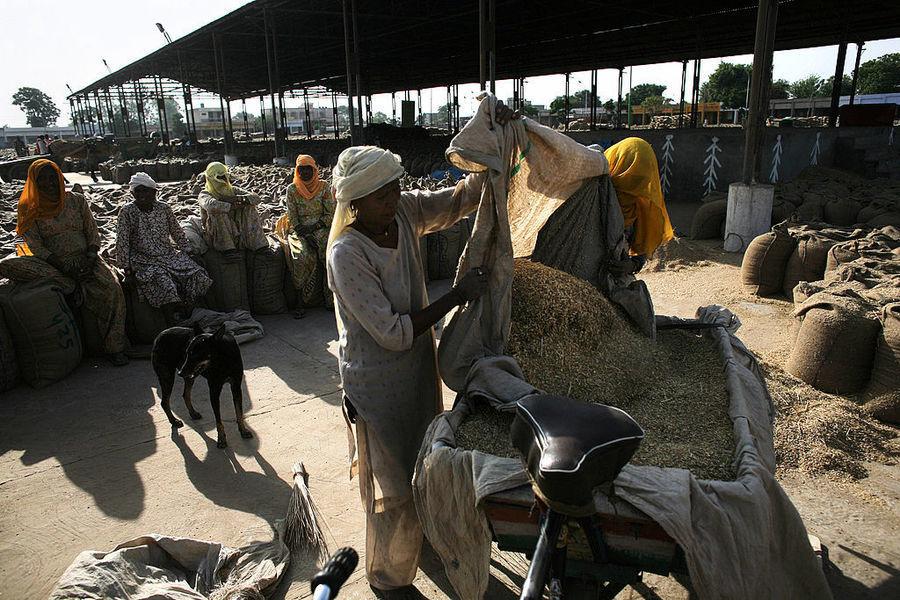 印度批發價8月年漲超過11% 黃豆與鐵礦砂飆逾100%