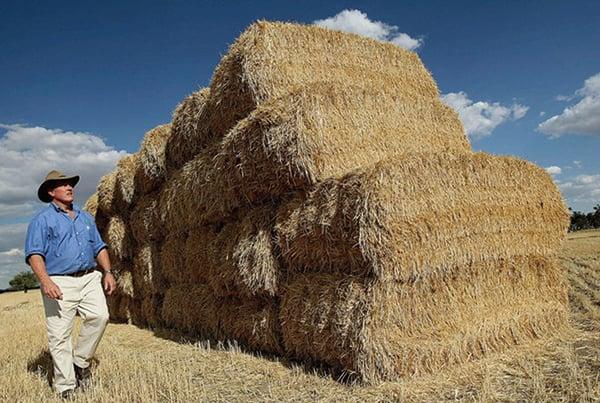 澳洲農業豐收 年增70億飆至730億澳元