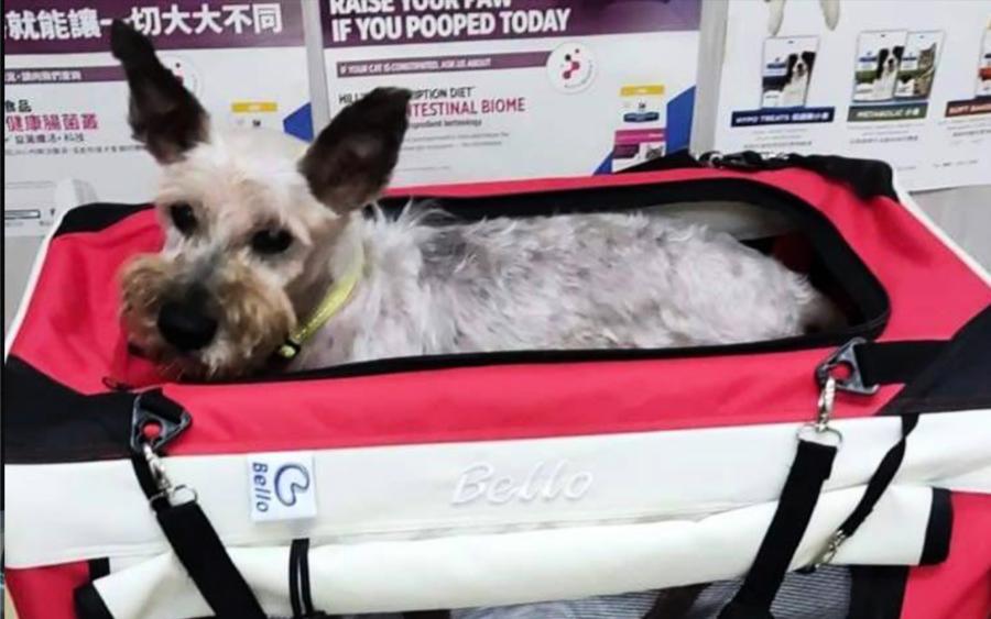 移民潮令寵物棄養急增  保護動物組織呼籲 離開前先替寵物尋家