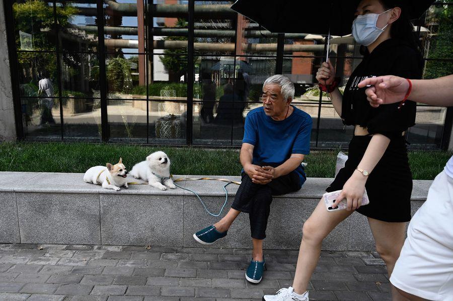 瑞銀研究部:預料中國寵物行業速增 國產或有望替代海外品