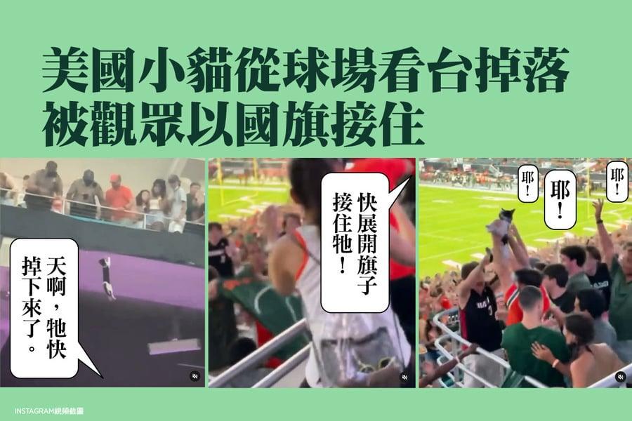 美國小貓從球場看台掉落 被觀眾以國旗接住