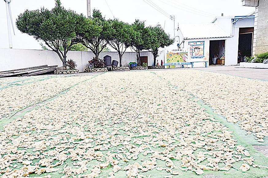 向日葵農場上正在曝曬的椰菜乾。