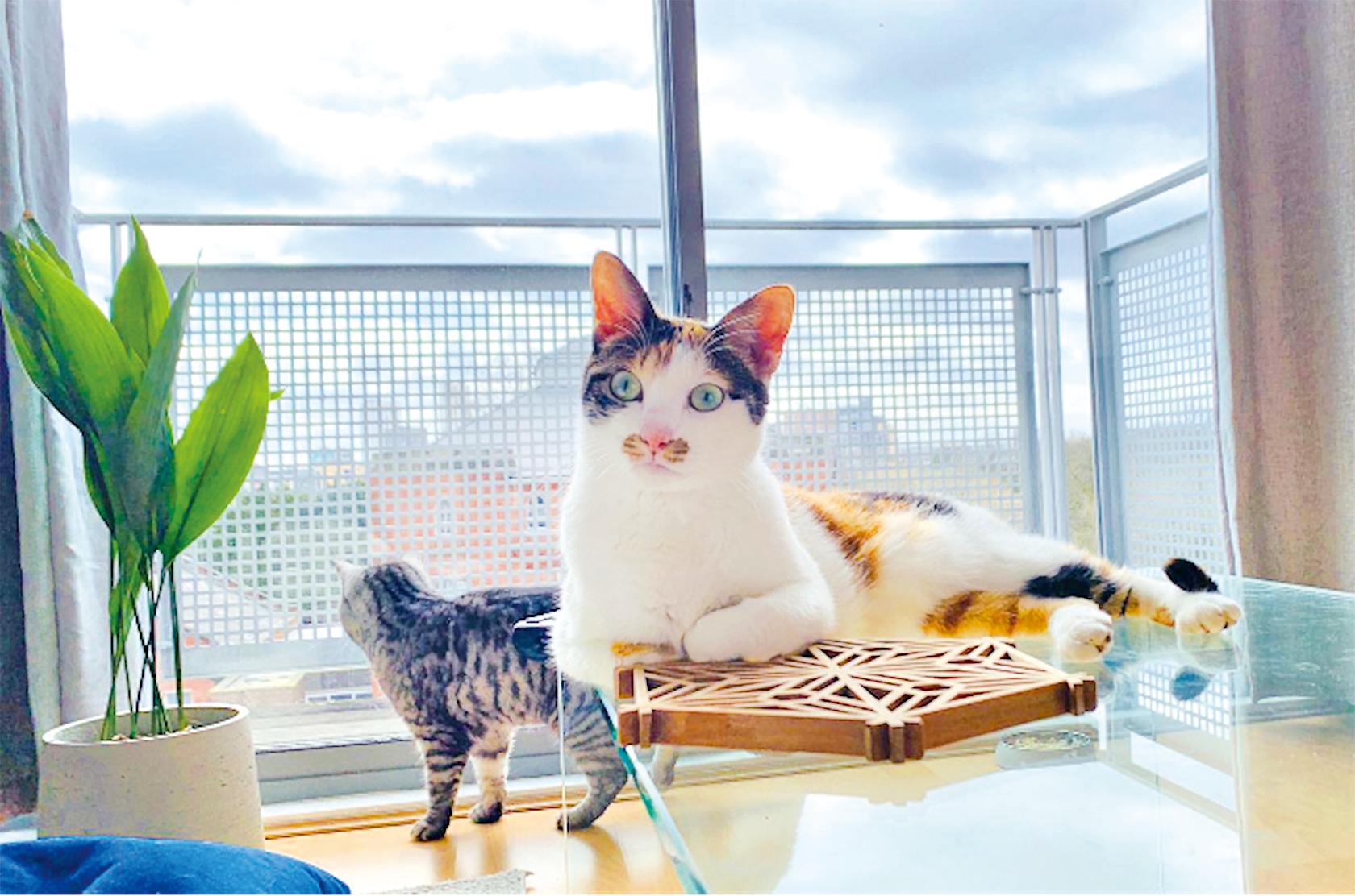 一對港人夫婦花費逾8萬帶同三隻愛貓移民英國。(受訪者提供)