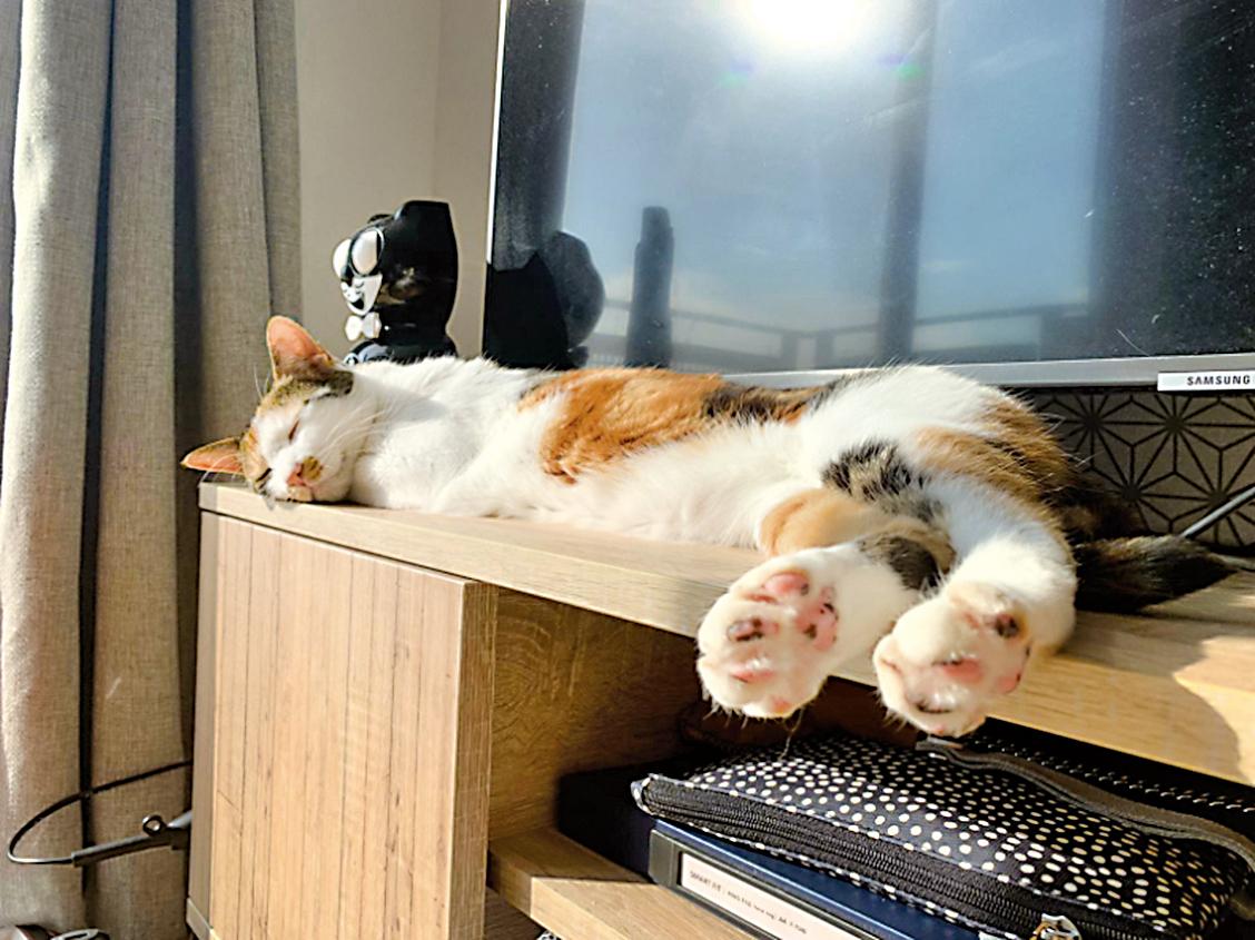 家貓苗苗,在客廳電視前享受英國的陽光和睡午覺。(受訪者提供)