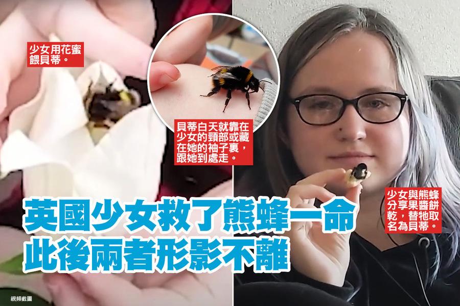 英國少女救了熊蜂一命 此後兩者形影不離