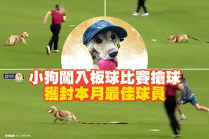 小狗闖入板球比賽搶球 獲封本月最佳球員